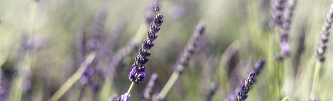 cropped-francis-manguy-0857-3.jpg